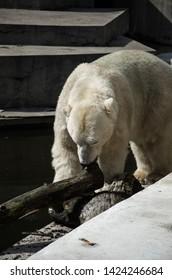 Polar bear on rocks in Zoo
