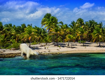 A polar bear out of place on a warm, tropical beach. Global warming, climate change, habitat loss and ironic social commentary.