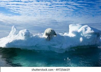 A polar bear sitting on the edge of an ice floe in the Svalbard Archipelago.