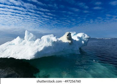 A polar bear sitting on the edge of an ice floe in the Svalbard Archipelago.