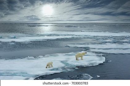 polar bear sow and cub walk on ice floe in norwegian arctic waters and illustrated against sun in distant horizon, wide angle of view - Shutterstock ID 703003783