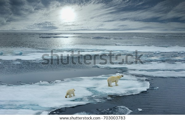 polar bear sow and cub walk on ice floe in norwegian arctic waters and illustrated against sun in distant horizon, wide angle of view