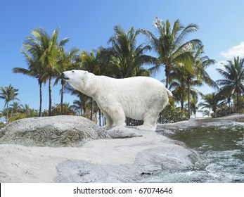 Polar bear stand on the rocks with tropic background, symbolizing climate change