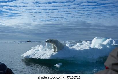 A polar bear stands on the edge of an ice floe in the Svalbard Archipelago.