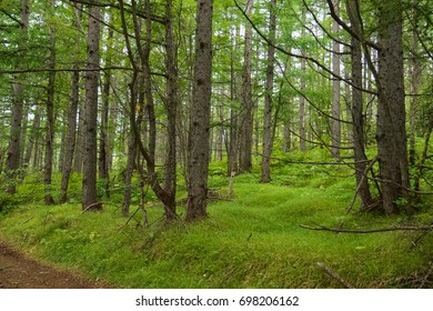 Polar forest in the summer. Green grass and pines above. Northern territory of the Siberia.