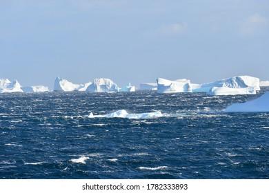 polars North and South pole antarctica artic wild life