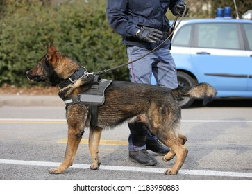 polcie dog and policeman on the street of city during check