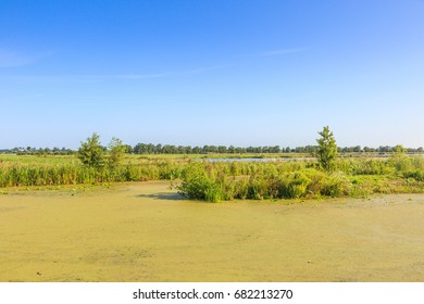 Polder landscape with new nature of bird nature reserve Willeskop in the Dutch province of South Holland near the village of Oudewater