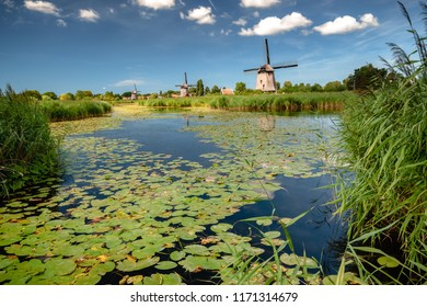 Polder landscape with water lily, green water leaves, reed fields and water channels Beautiful day along the city Alkmaar, Netherlands in spring. Travel