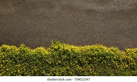 Pole aerial photo of pavement bordered by small yellow flowers and grass.