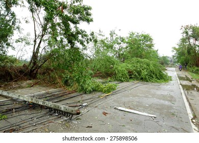 a pole and a tree laying across road after storm