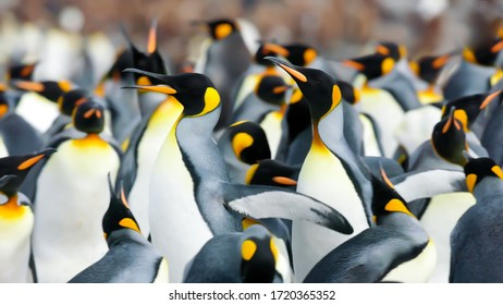 pole wildlife area group of penguins in the nature