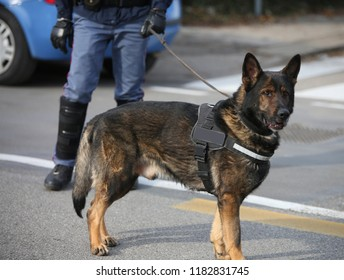 police dog called canine unit k-9 in the city