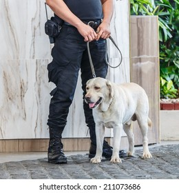 Police dog with human partner