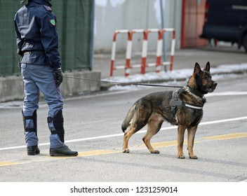 police dog of the Italian police during a big soccer game