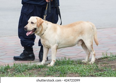 Police Dog with K-9 Unit