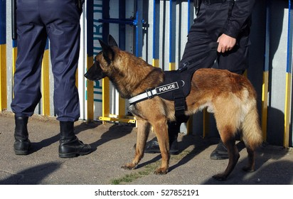 Police dog with people