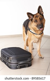 Police dog with suspicious luggage