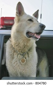 Police dog wearing a badge in Sheriff's vehicle.
