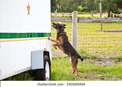 Police K9 dog training, narcotics canine sniffing vehicles, drug search training