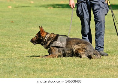 A police K9 dog works with his partner to apprehend a bad guy during a demonstration