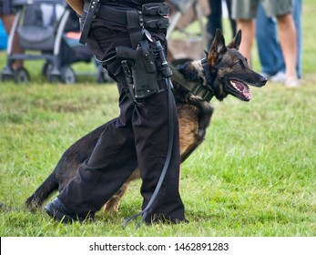 Police K9 working dog demo, narcotics search and criminal apprehension training, Belgian Malinois German Shepherd canine cop