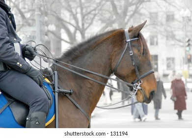 Police officer patrolling on horseback; (taken in DC on the day of George W Bush's inauguration)