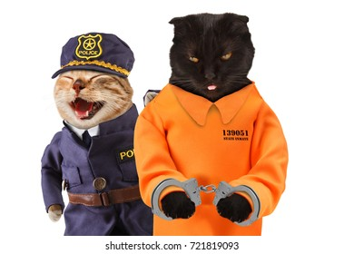 Police officer with prisoner in orange jump suit. Two funny cats. Violation of the law.