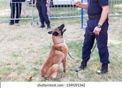 Policeman with Belgian Malinois police dog