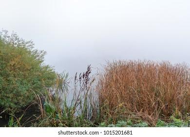 Polish foggy landscape