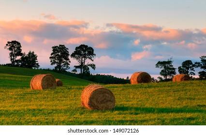 Polish Summer Fields