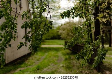 Polish village ,shack  driveway nature