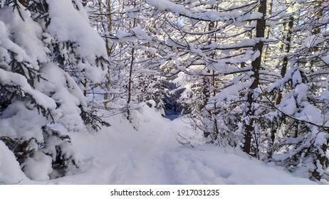 Polish winter in Karkonosze mountains - Shutterstock ID 1917031235