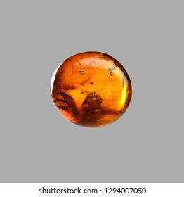 polished amber with butterfly fossil inclusion