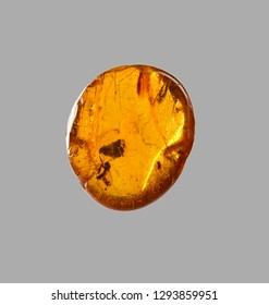 polished amber with insect fossil inclusion