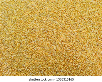 Polished millet texture  background. Cereal millet plant grown in warm countries on poor soils. Dry millet used for flour or porridge - diet gluten free vegan food, traditional russian meal, bird meal