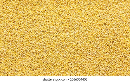 Polished millet -texture and details - traditional food