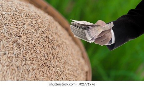 Politician with Rice subsidy scheme concept
