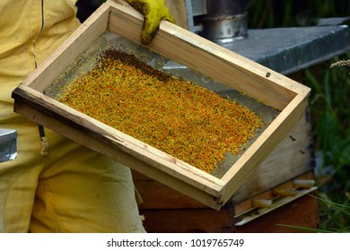 a lot of pollen accumulated in a collection mesh that holds a man in a suit of protection against bees