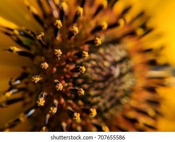 pollen on flower