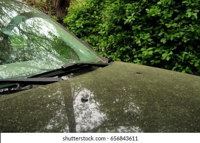Pollen on the hood of a car. Allergy season.