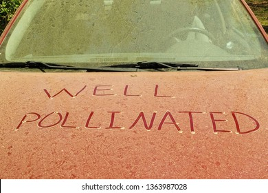 Pollen from pine trees blanket a car in North Carolina. A note in the dust on the hood reveals thickness. Humorous tone that states the car is pollinated hopefully to naturally reproduce a new car.