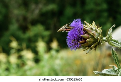 POLLINATION ARTICHOKE FLOWER