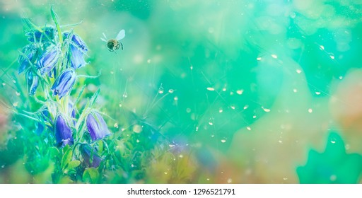 Pollination with bee and blue bell flower with sunshine, copy space