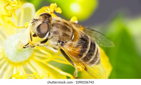 Pollination. Insect harvesting pollen from blooming flowers