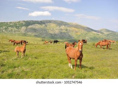Pollino National Park, Horse, Basilicata, Calabria, Italy