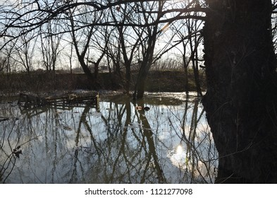 Polluted river water in a flood with flooded trees on a river bank