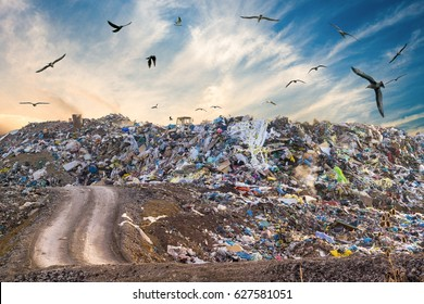 Pollution concept. Garbage pile in trash dump or landfill. Birds flying around.