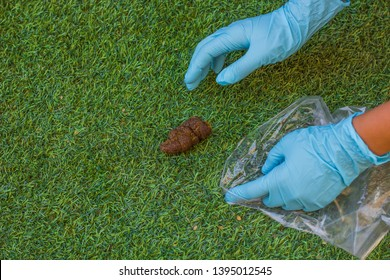 pollution and feces analysis concept picture of human hands in blue rubber gloves take animal shit to small cellophane bag from green grass outdoor park meadow place for walking with domestic pets