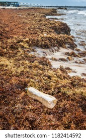 Pollution of ocean: Plastic bottle on the seaweed which covers beaches at the Carribean.
